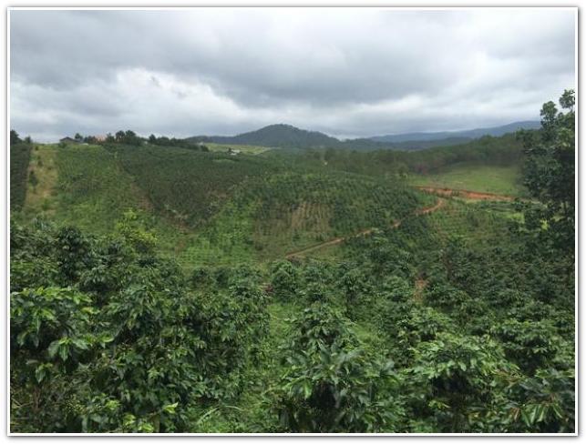 Кофейные плантации Вьетнам
