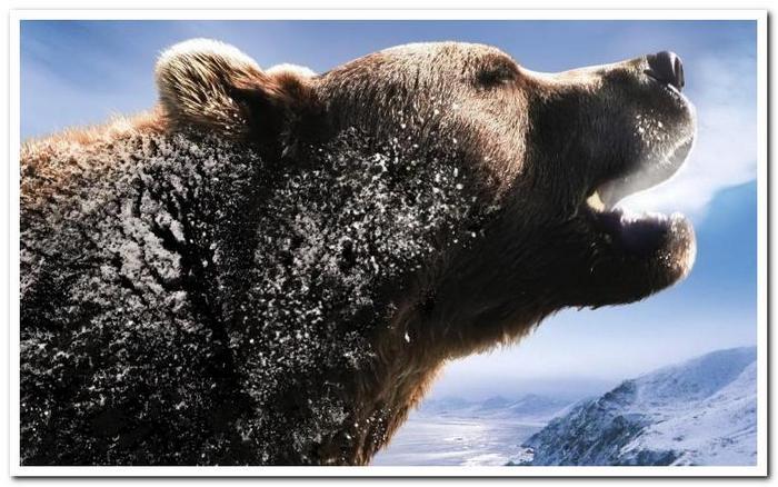 Медведь Сибирский Экшен