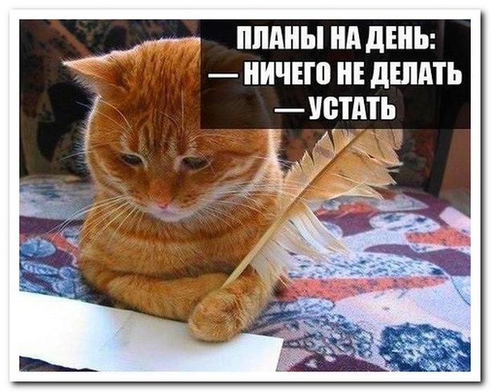 кот планирует день