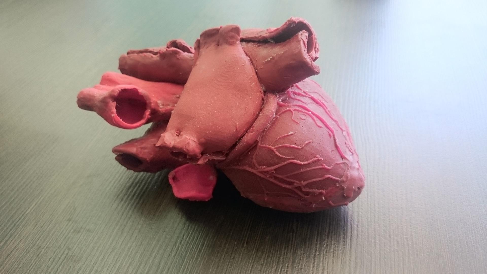 С помощью 3D-печати был создан главный орган чловека