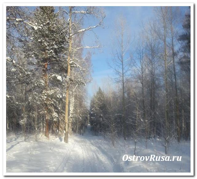 Тайга иркутск