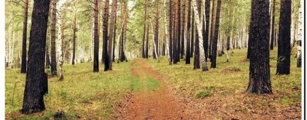лес под Иркутском фото