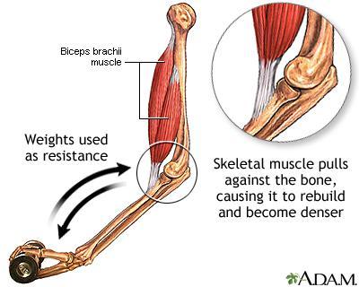 плотность костной ткани