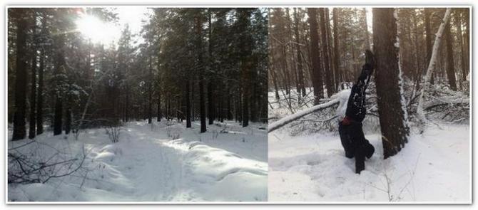 Зимний лес и стойка на руках возле дерева