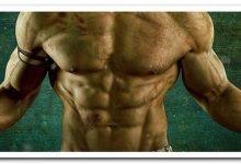 мускулы торса