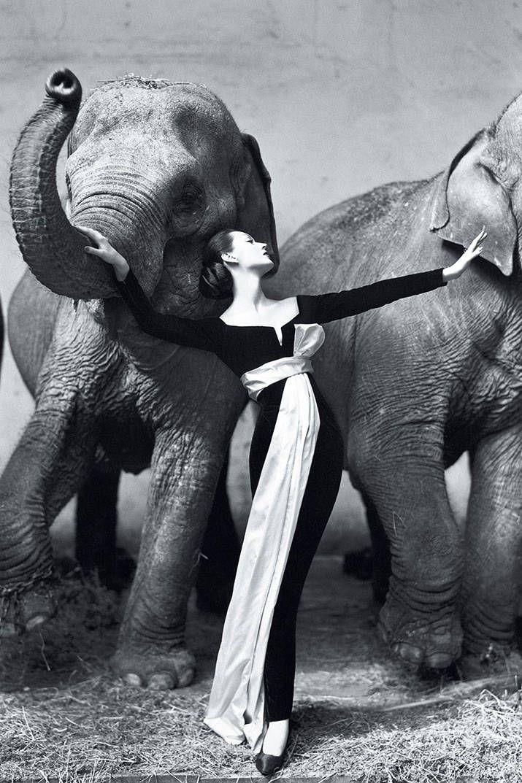 Ричард Аведон. «Довима и слоны»