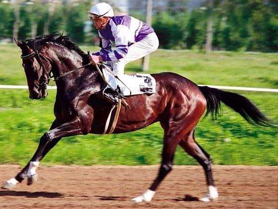 Арабская лошадь- описание породы, уход, разведение
