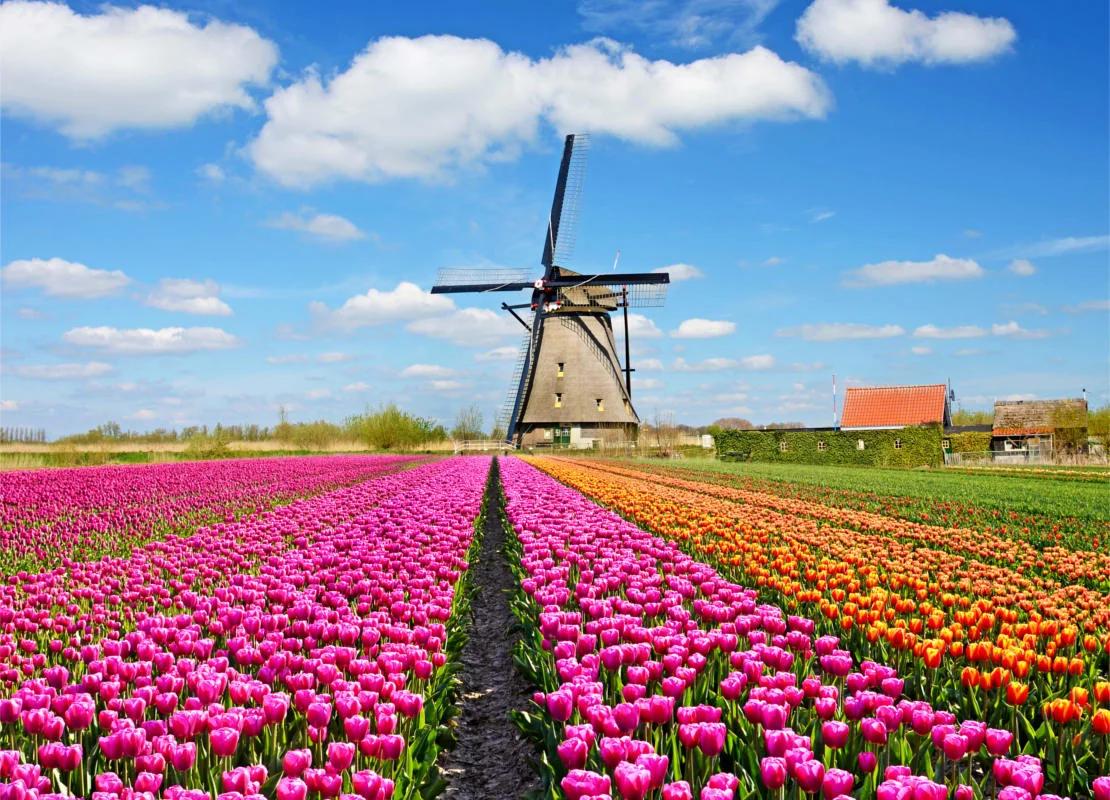 Поля тюльпанов, апрель