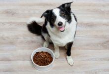 Лучший сухой корм для вашей собаки: рейтинг Роскачество