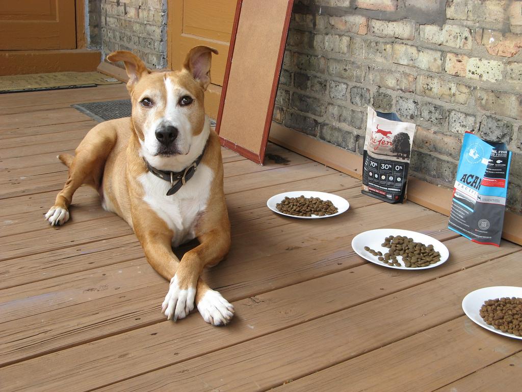 какой корм для собаки лучше