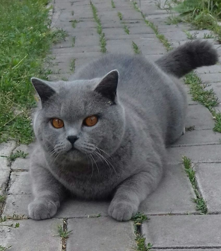 Кот на дорожке