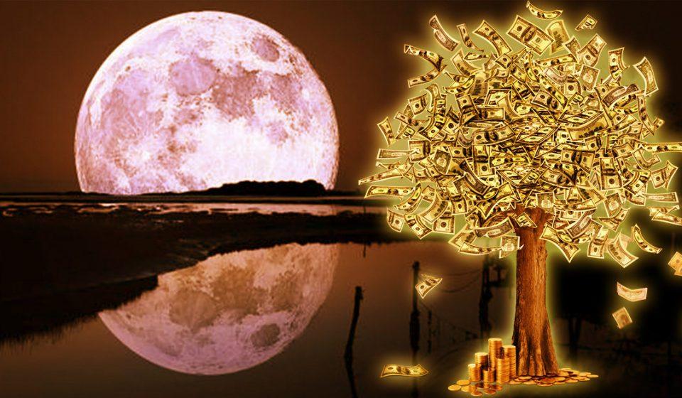 Луна и денежное дерево