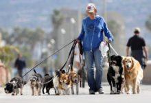 Мужчина выгуливает много собак