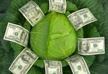 капуста и деньги