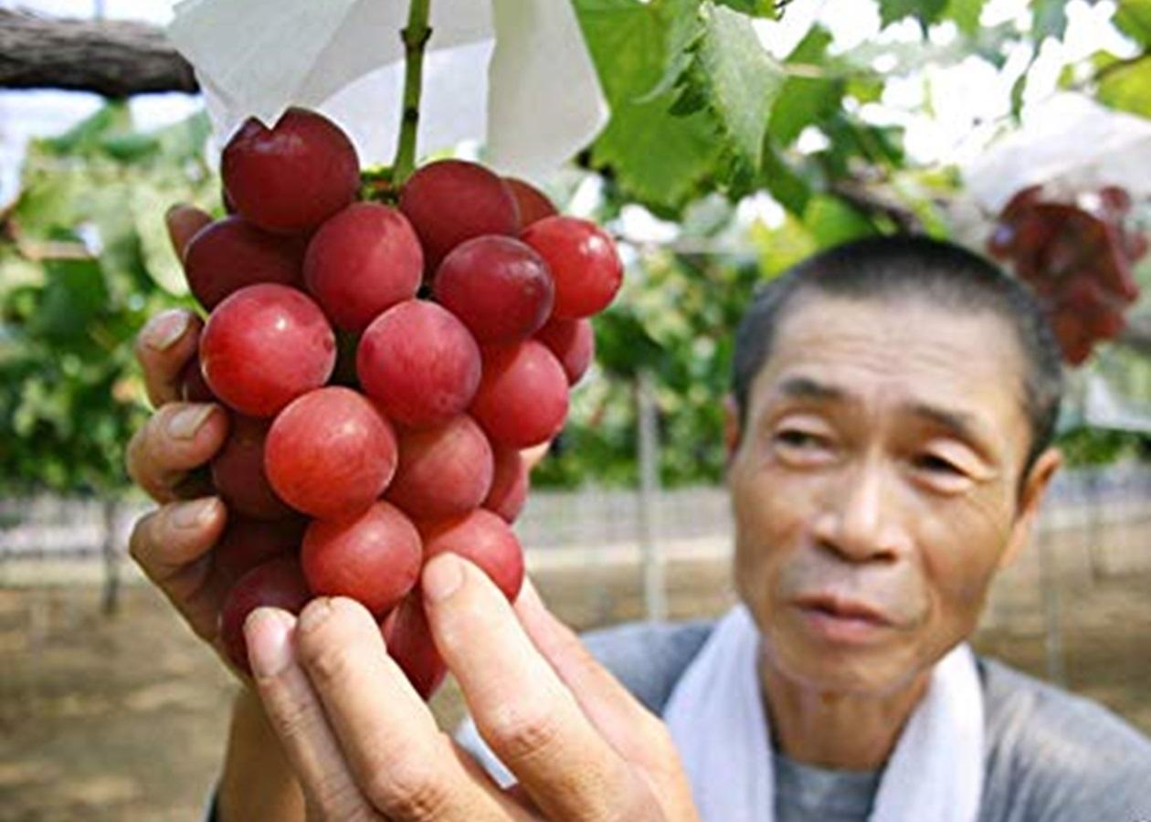 Римский виноград