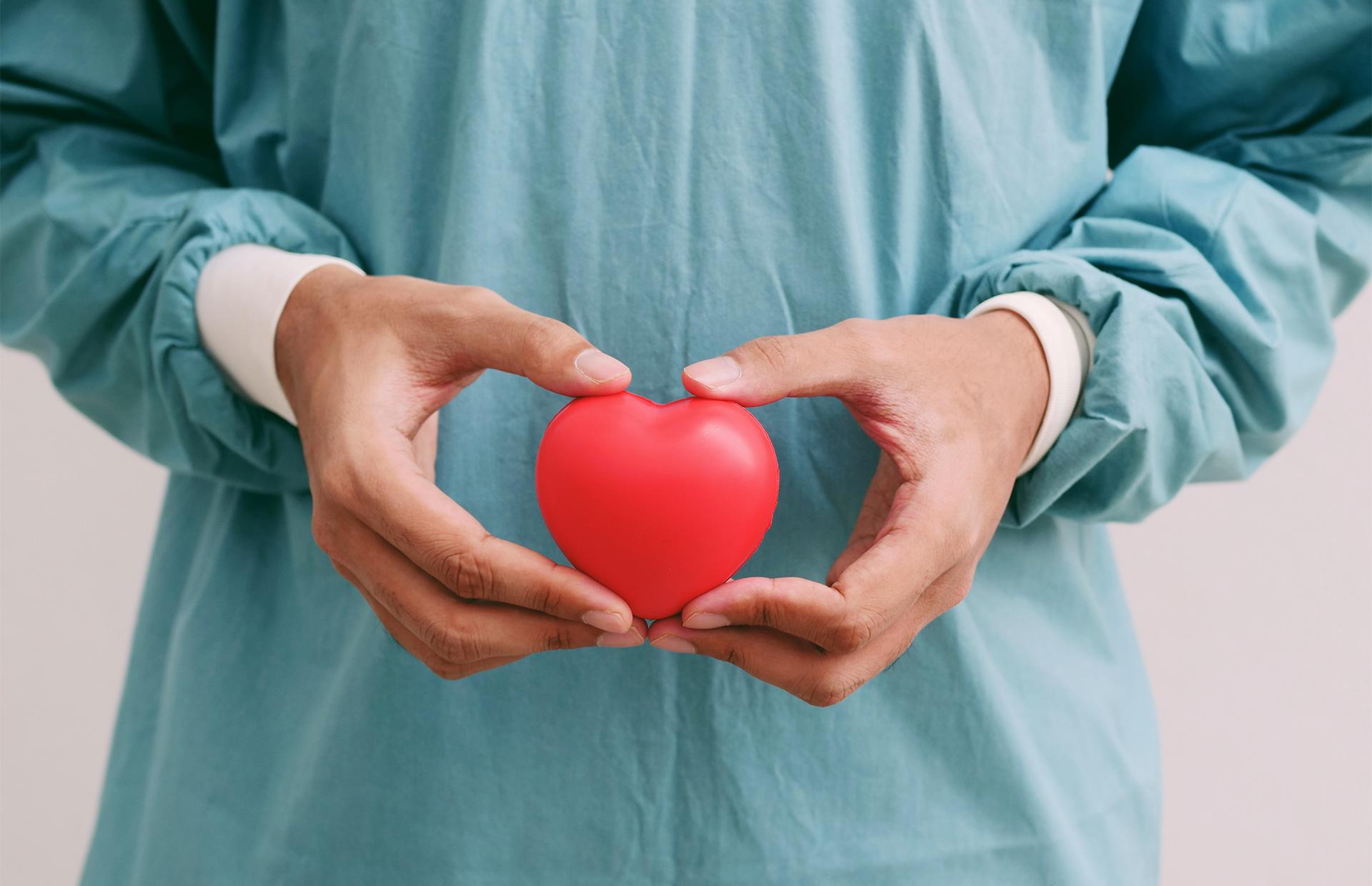 Игрушечное сердце в руках врача