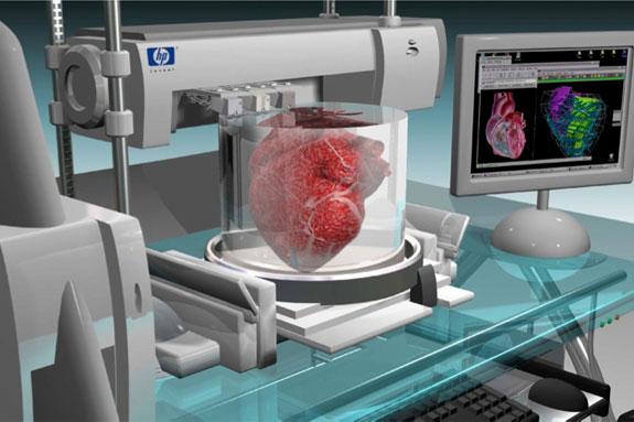 Виртуальная модель хранения донорской сердечной мышцы в лабораторных условиях