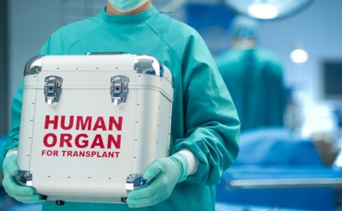 Человеческие органы в специальном контейнере в руках медработника