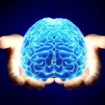 Человеческий мозг в руках