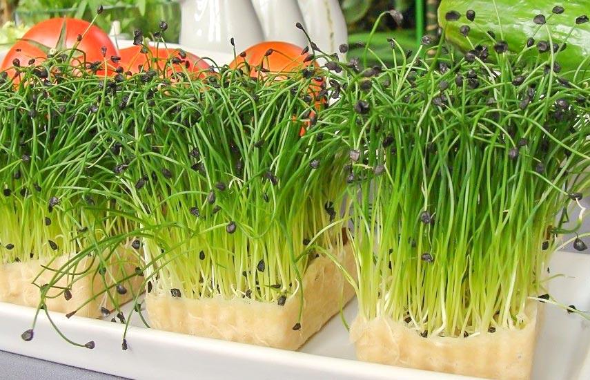 Блоки с микрозеленью