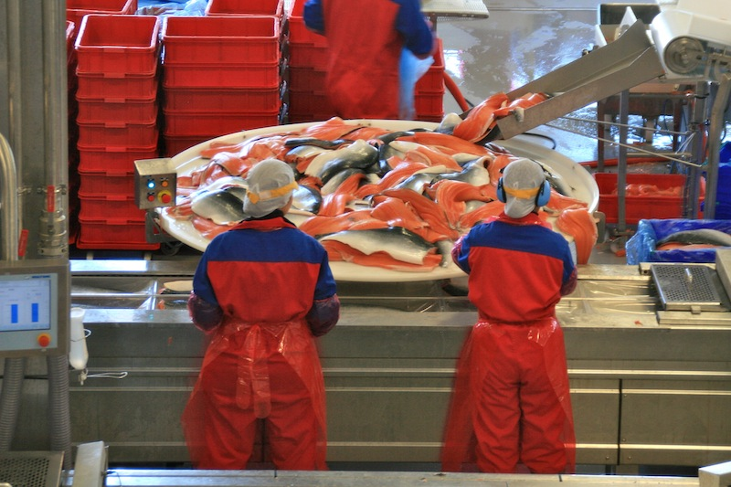 Переработка сырья на рыбном заводе