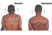 Движение плеч