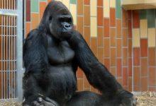 Дзэн обезьяна