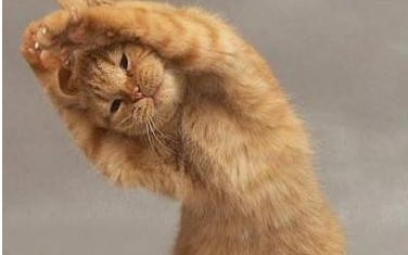 потягивания кота