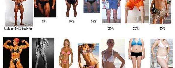 Процент жира мужчины и женщины