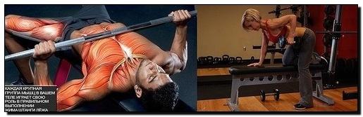 жим лежа тяга в наклоне упражнения